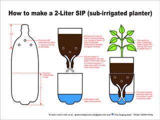 Homemade 2-lt SIPs: A SIP is a Sub Irrigated Planter. Sub meaning bottom, irrigated meaning watered, and planter meaning… well you know. So a SIP is a planter watered from the bottom.