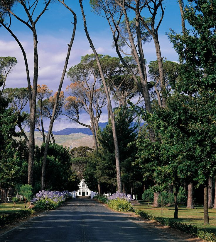Boschendal wine estate | Paarl - Western Cape, South Africa. Wonderful coffee shop under the trees and a special picnic site!