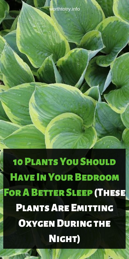 10 Crops You Ought to Have In Your Bed room For A Higher Sleep (These Crops Are E…