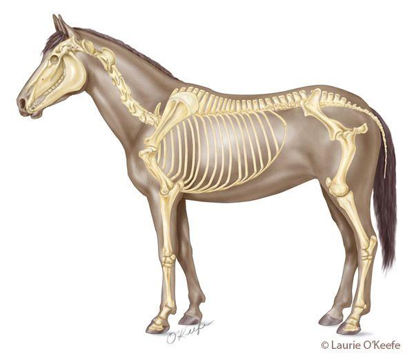Mejores 23 imágenes de Anatomy en Pinterest | Anatomía, Arte de ...