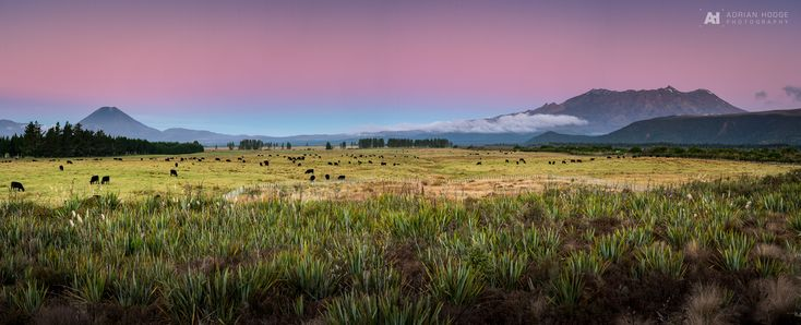 Shot this 11 frame panorama of Mount Ngauruhoe & Mount Ruapehu in the Tongariro National Park moments after sunset on …