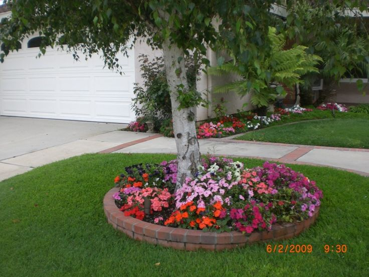 Landscaping under a maple tree front yard before and for Great small trees for landscaping