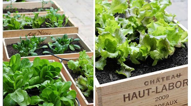 11 vegetales que puedes comer y volver a crecer de nuevo