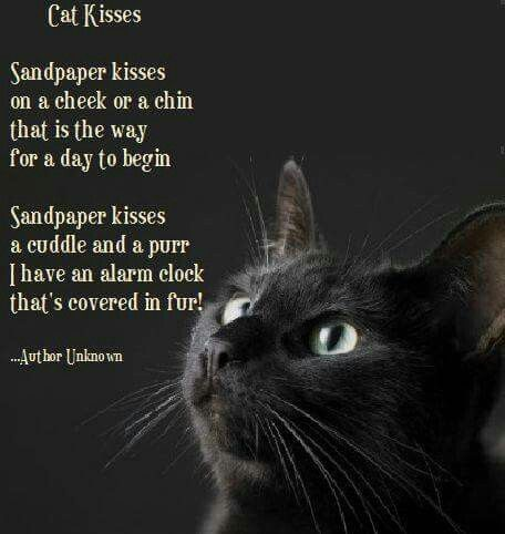 * * PURRFECT POEM.