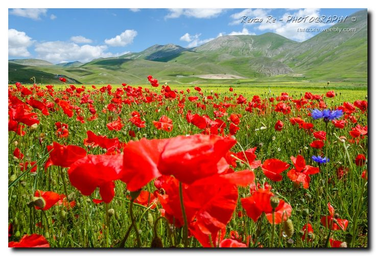 © Castelluccio Flowers http://http://www.photoone.org/editors-award-honorable/editor-award-honorable-october-2013-7415.html/attachment/11-10-2013-photo-by-renzo-re Photo One - EDITOR'S CHOICE AWARD- HONORABLE MENTION Renzo Re - PHOTOGRAHY © http://renzore.weebly.com