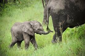 Our fav animal- elephant. ALMO