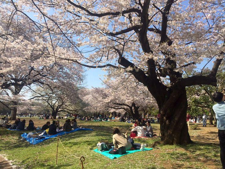 beginning of spring Yoyogi park