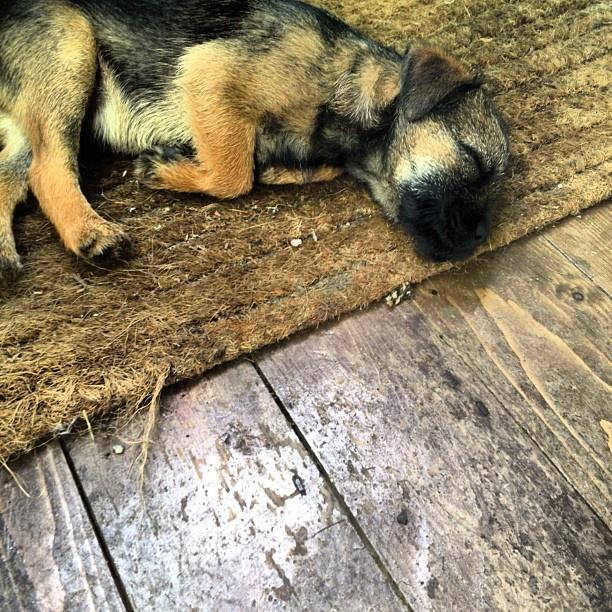 Puppy Instagram photo by Solopress