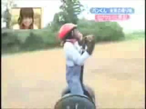 """This video Features a song from Parry Gripp.  Pan-Kun the Segway riding Chimp:  In 2008 a video clip of a Japanese game show was posted on Youtube, and it went viral seemingly overnight. The video clip was from a show called """"Shimura Zoo,"""" and it featured a little Chimpanzee named Pan-Kun learning to ride a Segway for his 7th birthday."""
