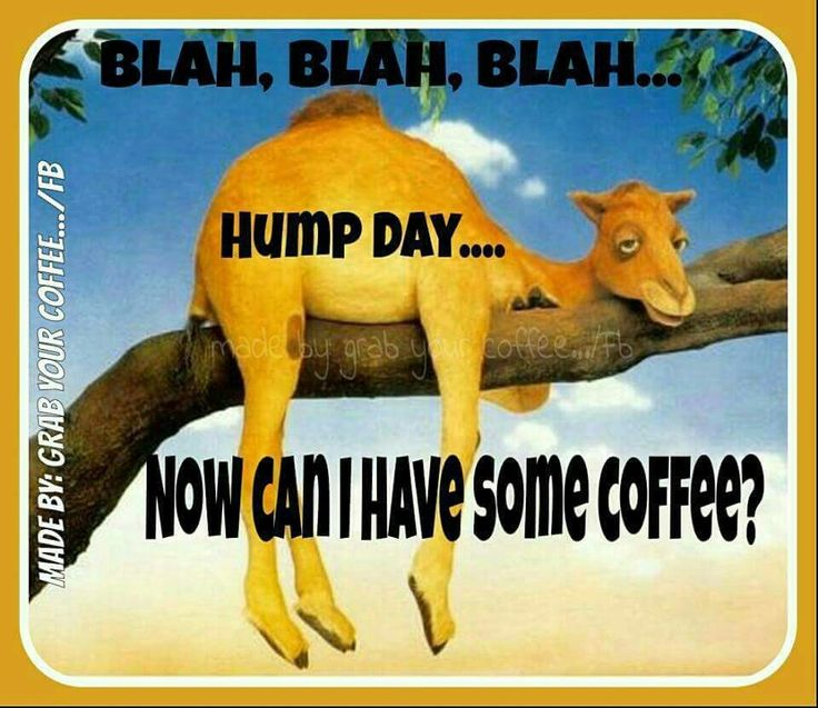Blah Blah Blah Hump Day Can I Have Coffee good morning wednesday hump day…