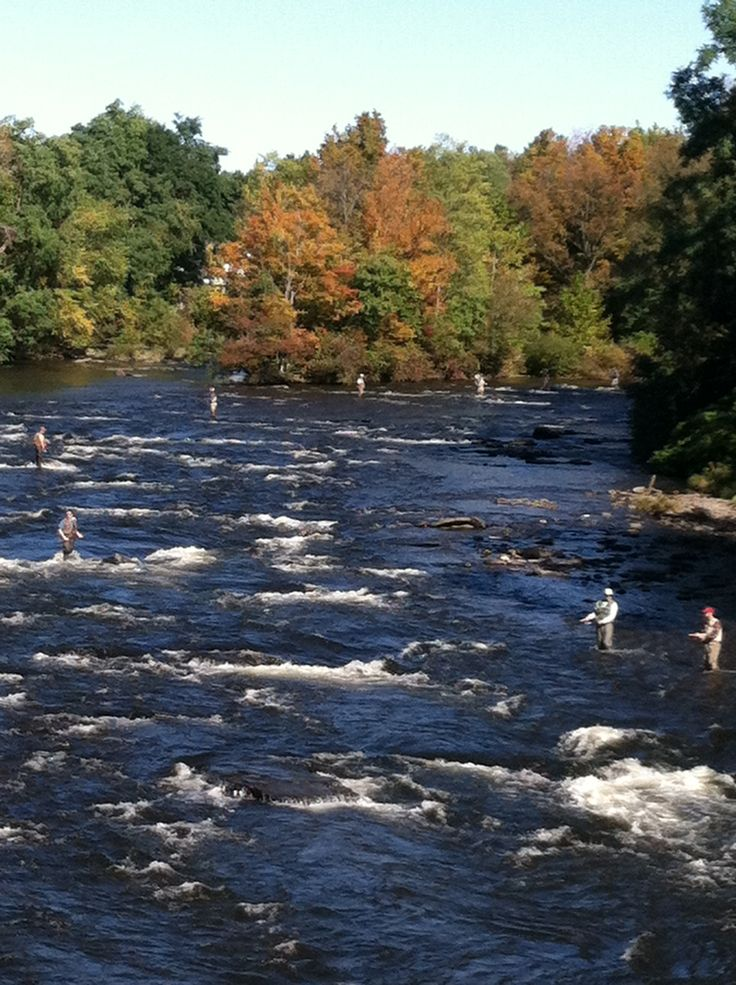13 best salmon fishing pulaski ny images on pinterest for Salmon fishing pulaski ny
