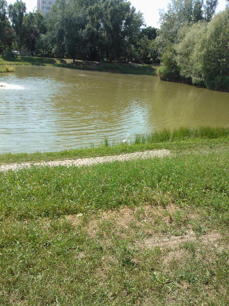 Zápor tó