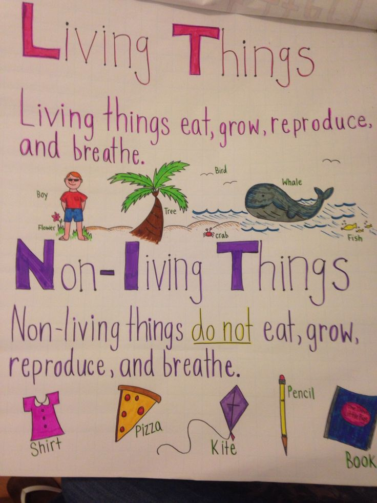 living and nonliving things pdf