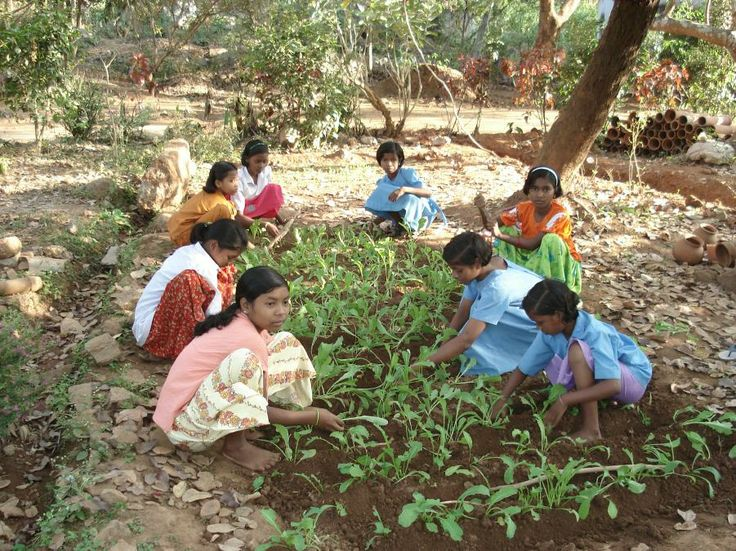 Kitchen garden maintained by students of the Koinpur School Odisha