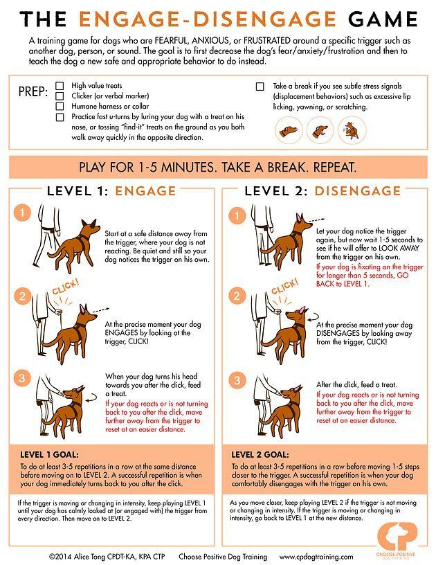 Choose Positive Dog Training The Practice Of Self Interruption