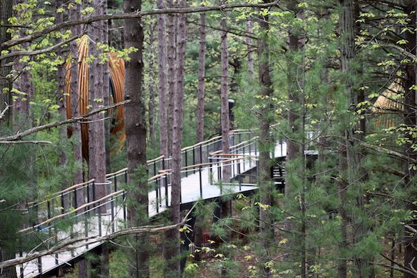 Whiting Forest Of Dow Gardens Canopy Walk Opened Oct 2018 This Looks So Cool Midland Mi Near Bay City Midland Bay City Michigan Michigan Day Trips