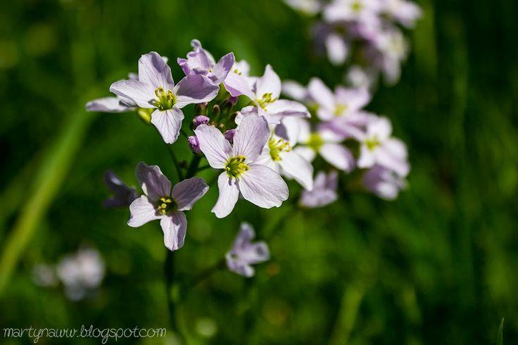 Cute spring flowers!