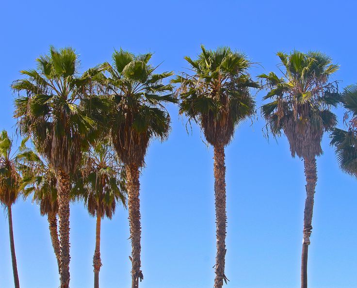 Let's visit the palm trees