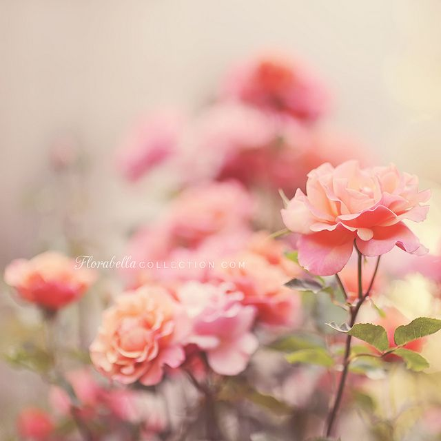 So soft and pretty! #clickaway #clickinmoms