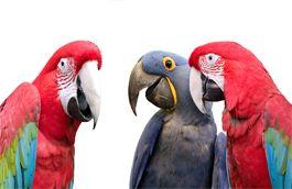 Parrot Partner Canada - Rescue - Rehabilitate - Adopt - Educate #parrots #parrot #petbirds #companionparrot #birdclub