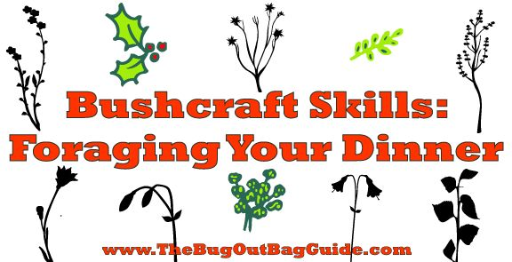 Being able to forage a meal is one of the most important bushcraft skills you can learn. Learn how to use your bushcraft tools to feed yourself off the land