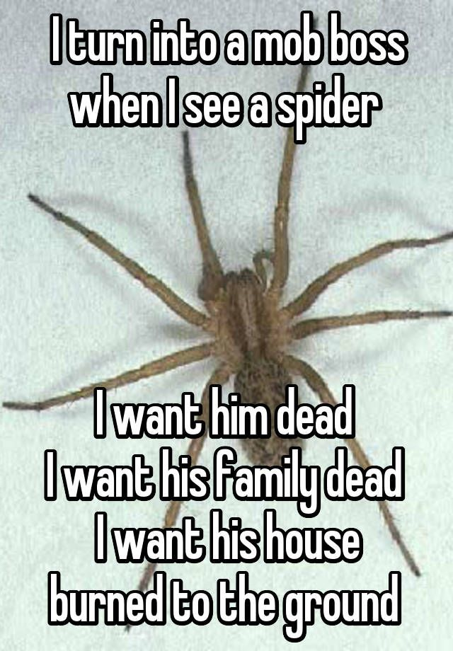 I turn into a mob boss when I see a spider I want him dead I want his family dead I want his house burned to the ground