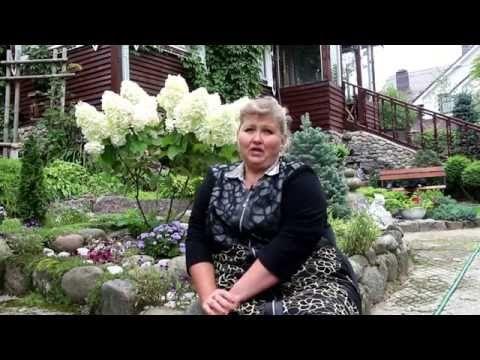 Гортензия: уход, посадка, обрезка - YouTube