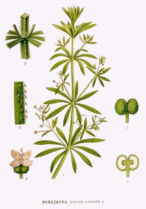 341 besten Naturally Artistic - Herbology Bilder auf Pinterest ...