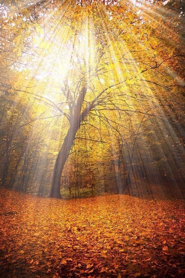 Sunbeams autumn