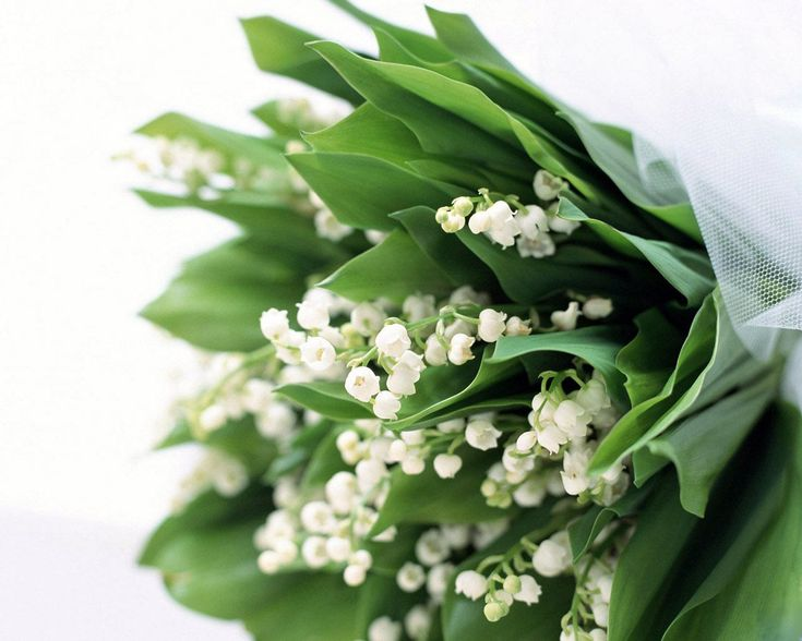 Lily of the Valley in May :: Birth Flower of the Month