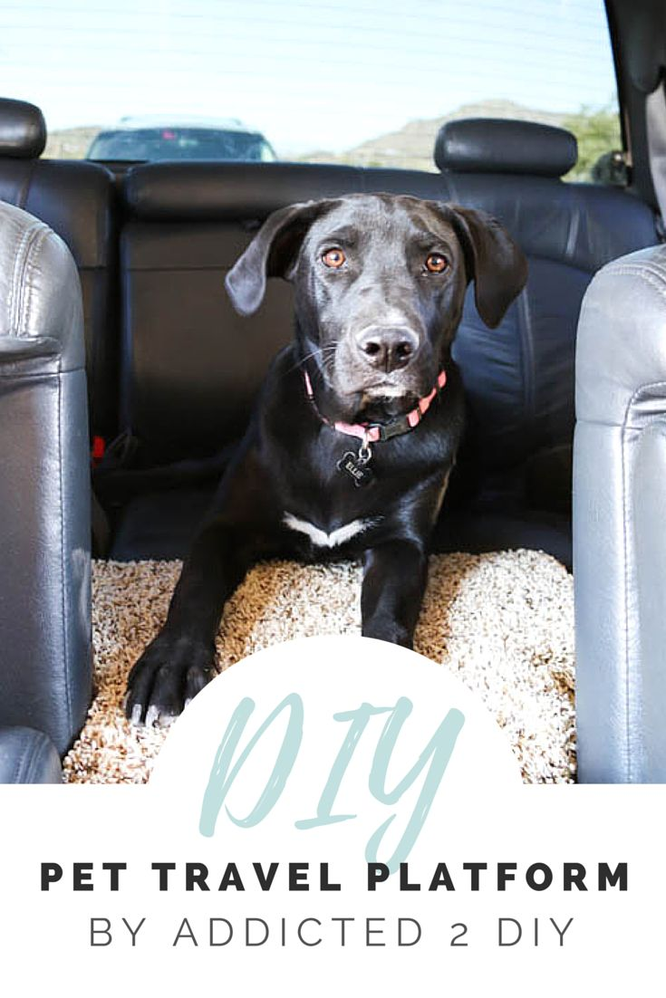 Traveling with a pet can be tricky- especially traveling with a large dog. Fortunately, Addicted 2 DIY came up with this DIY idea to make it easier to travel with your pet. Using just a few pieces of wood and some carpet remnants, you can build this DIY pet platform to make your dog comfortable in the car. Since the dog has his own space to stretch out, the kids will have more room too! Visit RYOBI Nation and see exactly how to make this easy DIY project.