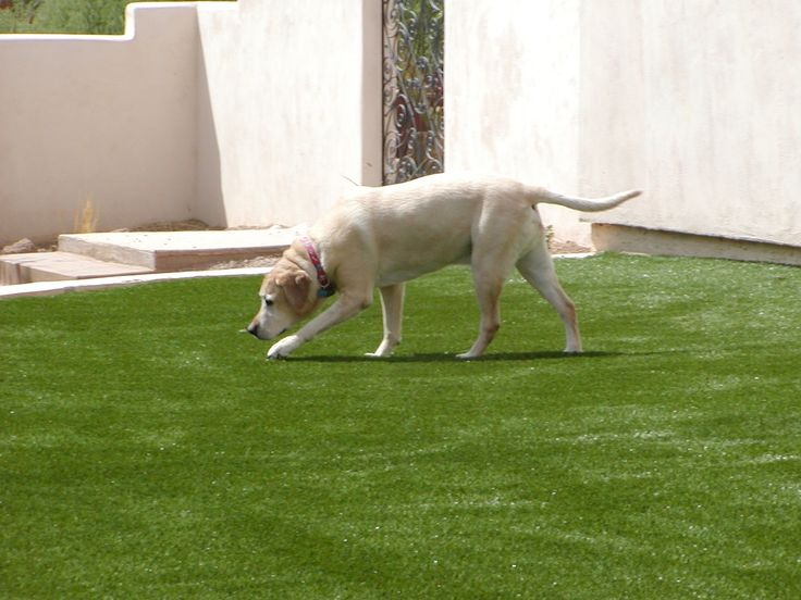 25+ Best Ideas About Artificial Grass For Dogs On