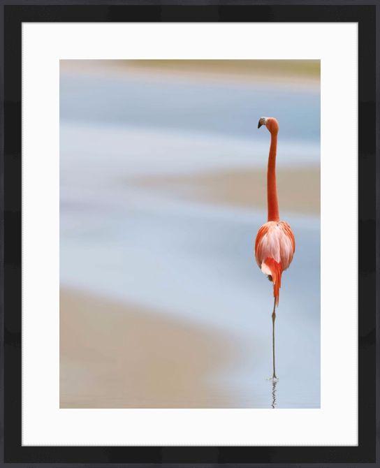 Quadro Pink Flamingo (Anna Cseresnjes) por On The Wall | Crie seu quadro | #quadro #flamingo #moldura