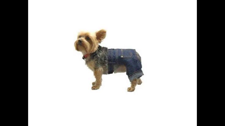 I choose what kind of dog clothing