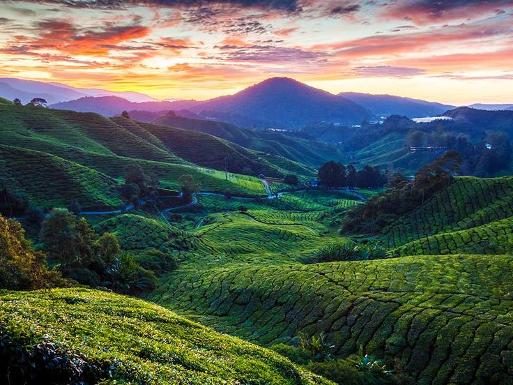 Cameron Highlands- The mossy forests of Malaysia.