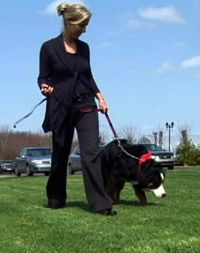 Service Dogs and Autism by Temple Grandin - Pinned by @PediaStaff – Please visit http://ht.ly/63sNt for all (hundreds of) our pediatric therapy pins