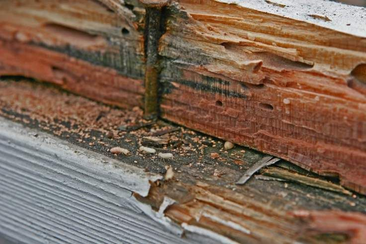 3 Tell Tale Signs Of Termite Infestation Termite Infestation Termite Control Termites