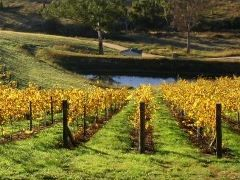 Wineries - Dryridge Estate | Visit the Blue Mountains