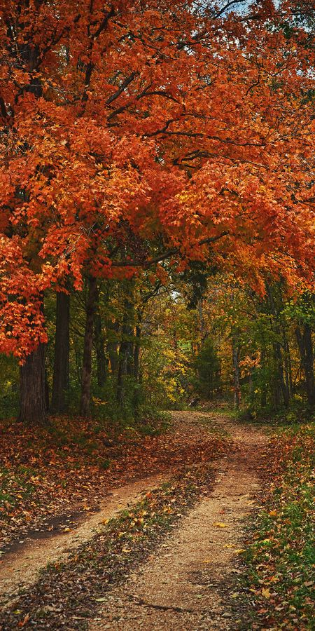 Country road at the Dillard Mill State Historic Site in Crawford County, Missouri, • photo: Aaron Fuhrman on 500px
