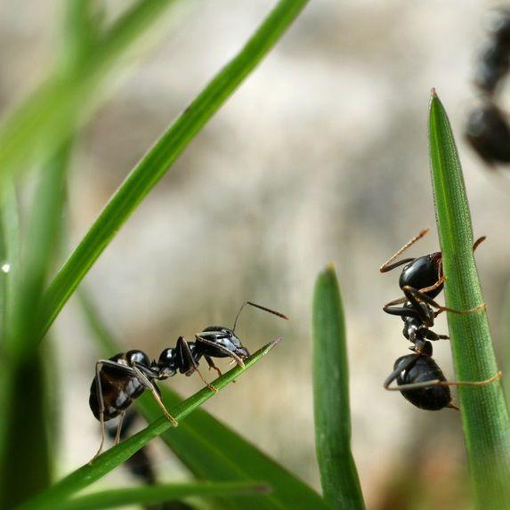 Les 25 meilleures id es de la cat gorie chasser les for Anti fourmi naturel maison