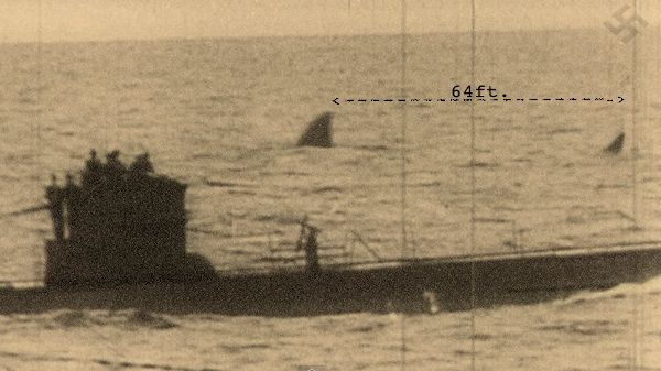 Declassified German war footage shows a giant shark way too big to be a great white shark in the background, checkout the measurement. Biologists have tried fishing for Megalodon Near South Africa during 2013 Shark Week On Discovery Channel. #Megalodon  #shark   @Hank Gray