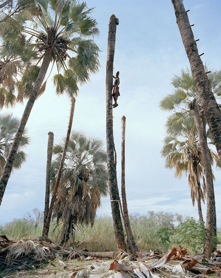 Palm Wine Collectors - Kyle Weeks