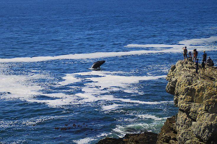 Whale Season © Tamlin Wightman