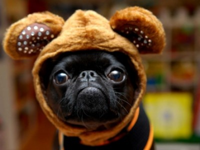 Video: Cute Halloween Pet Costumes | Petside