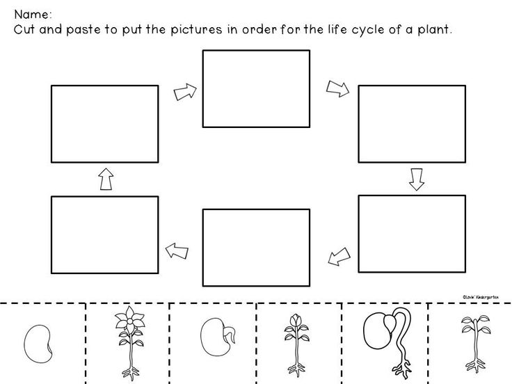 Lovin' Kindergarten has a great unit you can win.  Check out her Life Cycle of a Plant Cut & Paste.
