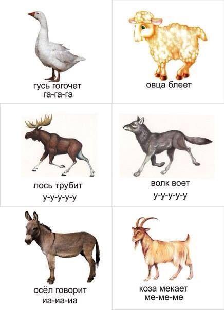 картинки животных со звуками гонорея