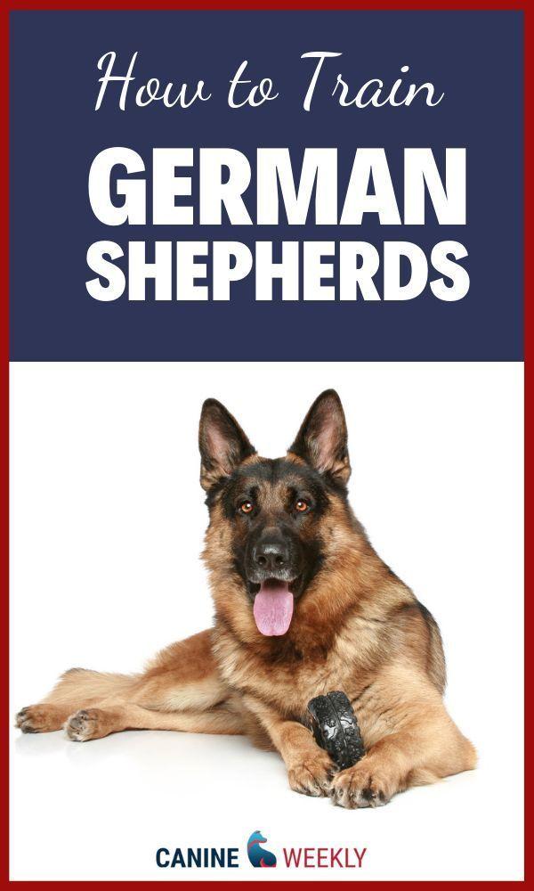 German Shepherd Training Basic Strategies And Helpful Hints All