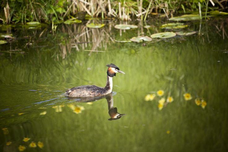 Wonen op het Eiland: Groene natuurlijke oevers, een waterrijke omgeving en fraaie architectuur.