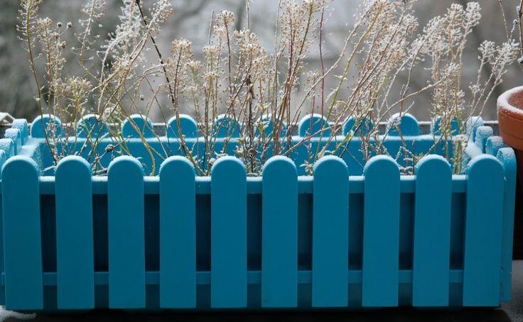 Niektóre rośliny możemy przezimować na balkonie. Trzeba tylko zabezpieczyć donice przed mrozem, a niektóre rośliny dodatkowo osłonić. Fot. Hans - pixabay.com