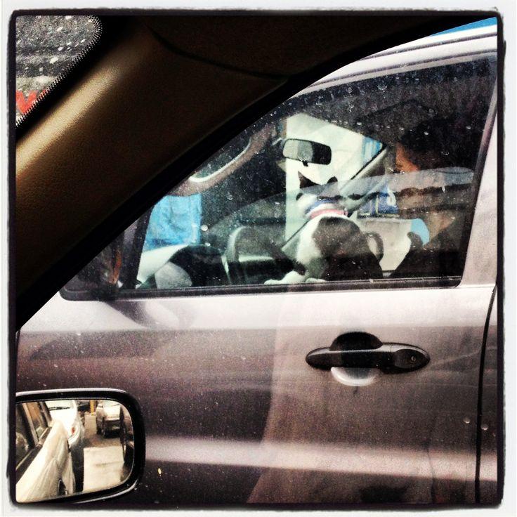 Aqui hay animales reales al volante - ©2013 @labogoteca